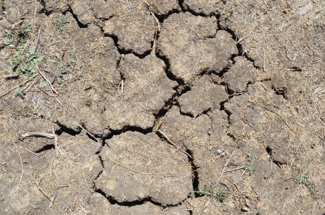 Земля в некоторых районах высохла до состояния камня.