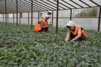 Осужденные женщины стремятся работать в подсобном хозяйстве