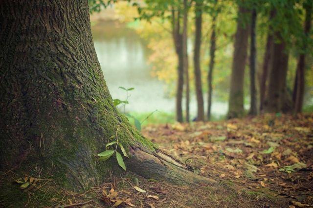 Первую ночь молодые люди спали в лесу.