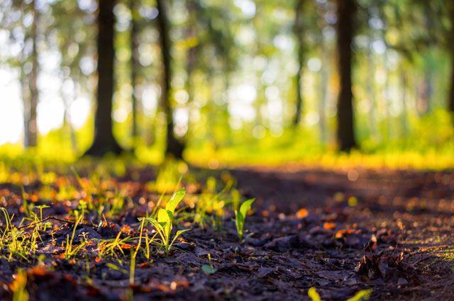 Гармония природы и общества. Обсуждение экопроблем пройдет на форуме в Туле