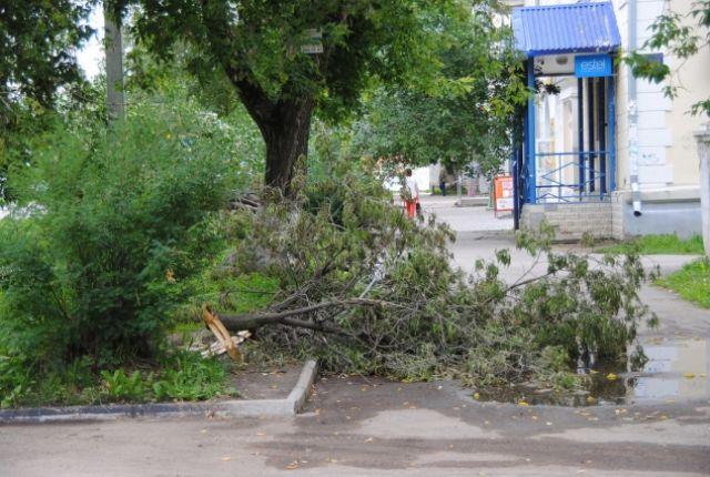 Дерево упало на тротуар по улице Удмуртской.