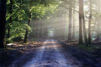 После допроса убийца показал место в лесу, где они закопали убитую девушку.