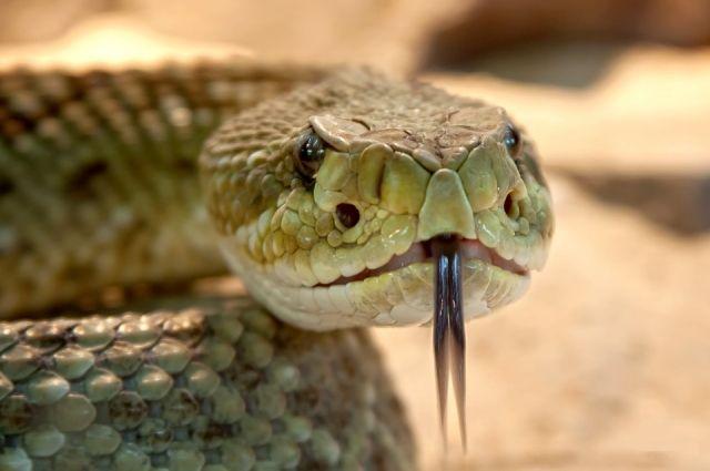 Змея ползала возле детского сада.