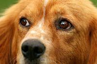 Собака, пострадавшая от рук тюменского живодера, проходит реабилитацию