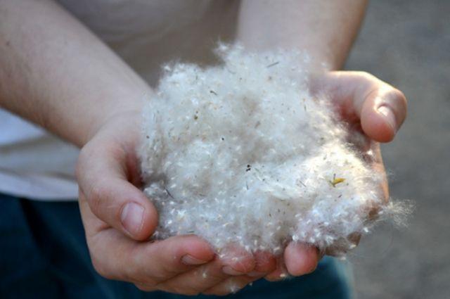 Как защититься аллергикам?