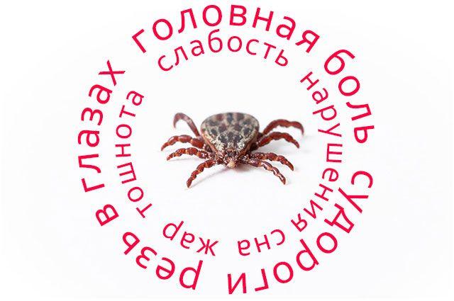 От укусов клещей пострадал уже 21 житель Ямала
