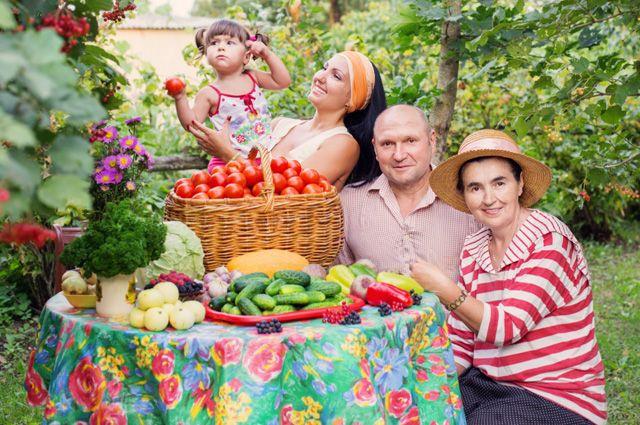 Побег от эпидемии? В Московской области предлагают бесплатные дачи