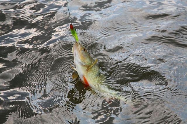 День рыбака тазовчане отметили 30 килограммовым уловом
