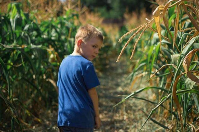 В Черкасской области в поле пропал двухлетний ребенок