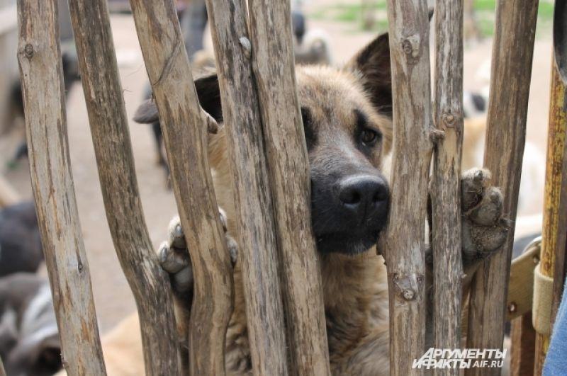 Собаки в приюте ждут тех, кто назовет их своими и заберет домой.