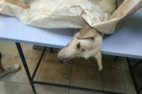 Полиция Харькова ищет неизвестного, который избил и завязал в мешок собаку