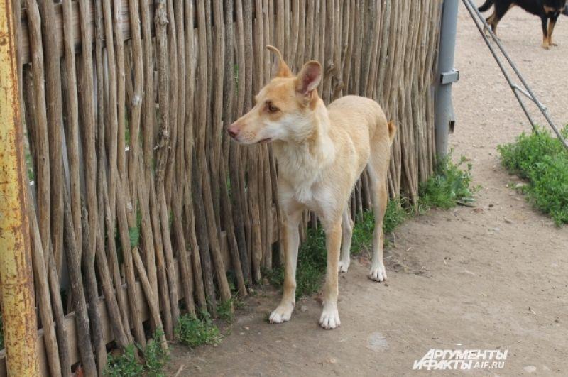 Собаки, живущие в Хохлове, ухоженные и чистые.