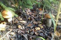 Потерявшейся в лесу женщине 84 года.