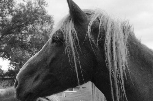 По словам владельца хозяйства, лошади сбежали во время проведения фестиваля «Небесная ярмарка-2018».