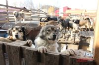 Жители Лабытнанги готовы купить еду бездомным животным