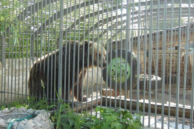 Медведя, которого держали в клетке у придорожного кафе, продают за 200 тыс. руб.