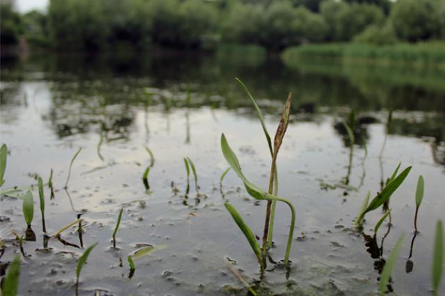 Озеро Ковалевское