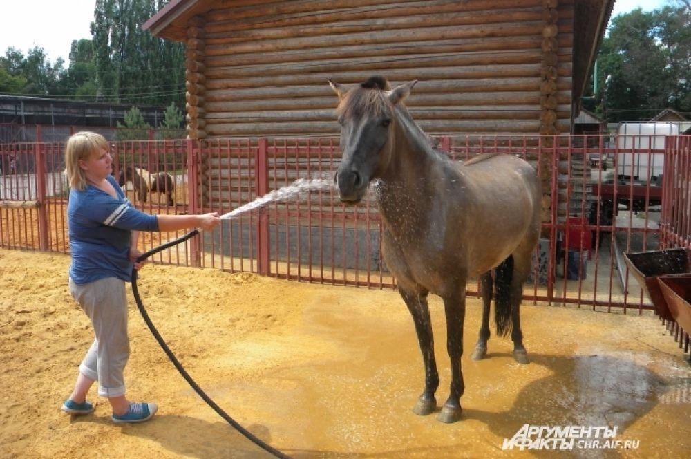Лошадь Мышка с удовольствием подставляет бока под струи воды.