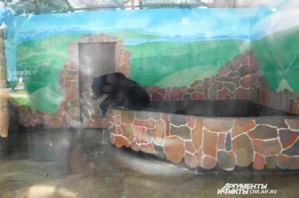 У медведей в зоопарке есть собственный бассейн.
