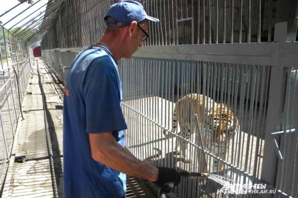 Тиграм по 2-3 раза в день меняют воду в поилке.