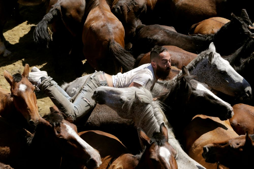 Традиционный праздник «Рапа-дас-Бестас» в местечке Сабуседо, во время которого местные жители подстригают гривы диких лошадей, Испания.