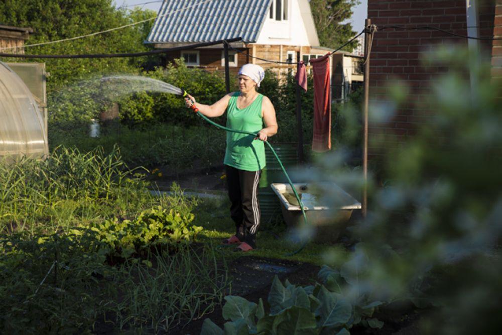 Также многие дачники ухаживают за своим урожаем, поливают грядки.
