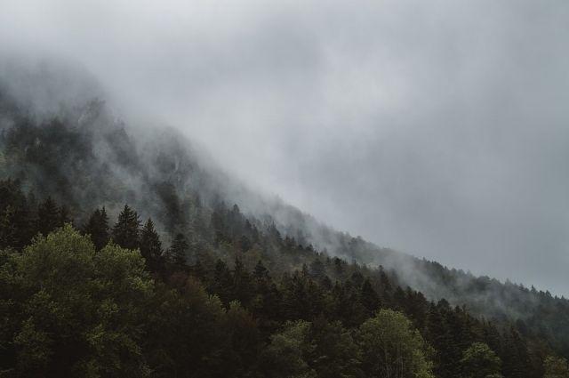 В Тазовском районе горит лес