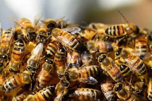 В Тюмени на балконе жилого дома поселился рой пчел
