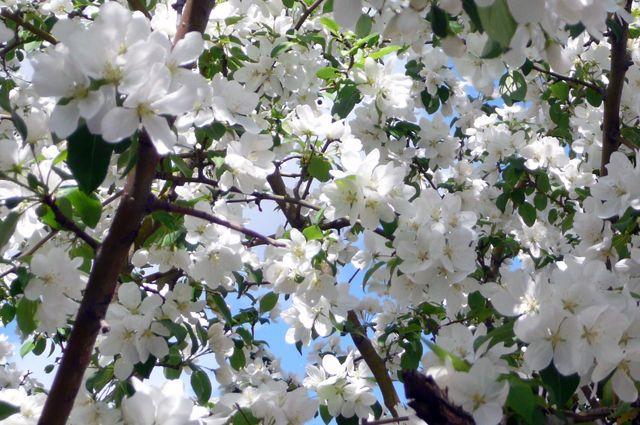 Возможно, уже следующей весной у театра зацветут яблони.