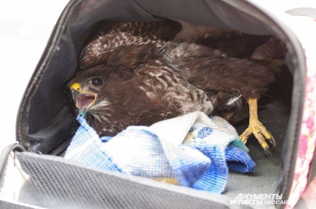 Птица улетела практически сразу после удара током.