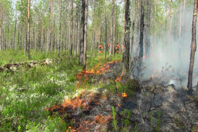 Рядом с Ноябрьском горит лес