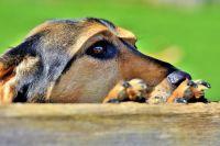 Собака несколько дней провела на балконе без еды и воды.