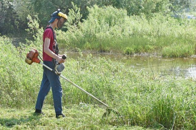 Трава может выполнять экологические функции в городе.