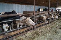Фермерское хозяйство под Ханты-Мансийском