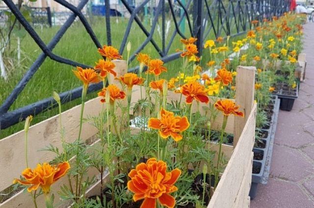 В Яр-Сале высадили более 15 тысяч цветов и сэкономили