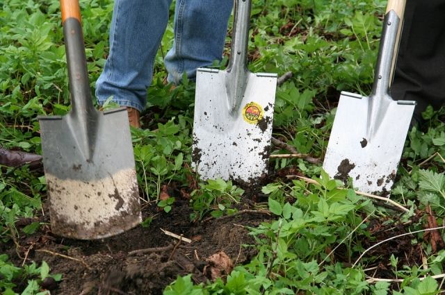 Договаривайтесь с собственником земли, чтобы он сам занимался ликвидацией сорняков или кому-то оплачивал эти работы.