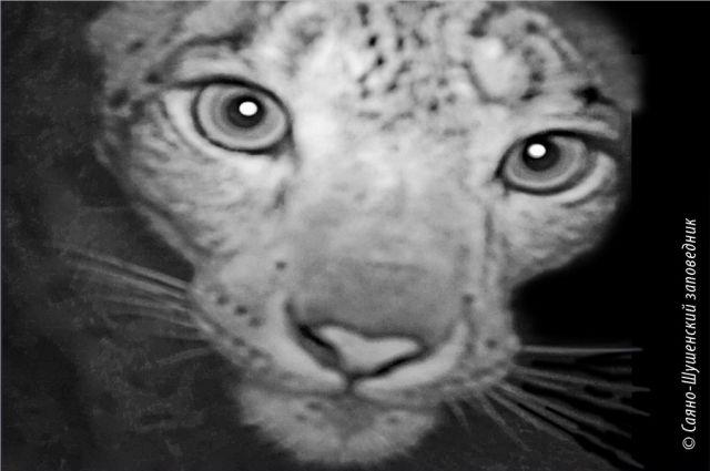 Животные  нелюбят фотографироваться иломают камеры вкрасноярском заповеднике