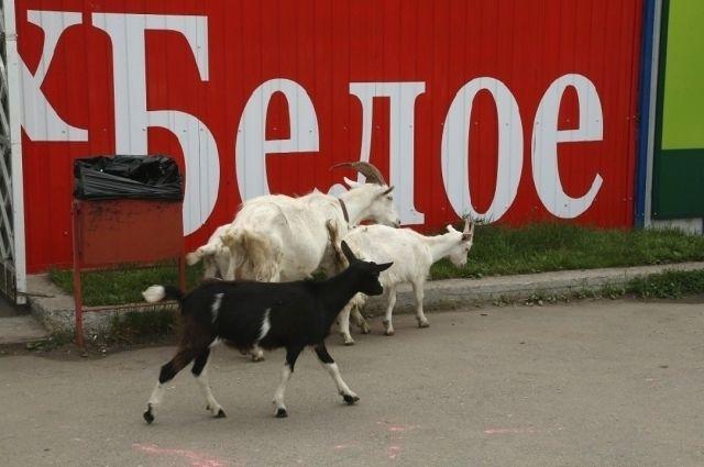 Торговая сеть попыталась отменить предупреждение УФАС в Арбитражном суде Пермского края, но инстанция отказала в удовлетворении требований.