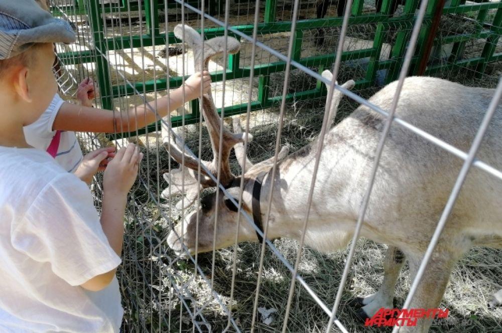 Детям понравился северный олень.