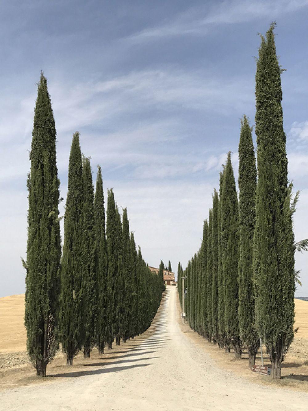 Лидия Мунтян, Румыния. 1-е место в категории «Деревья». Дорога Тосканы. Снято на iPhone 7 Plus.