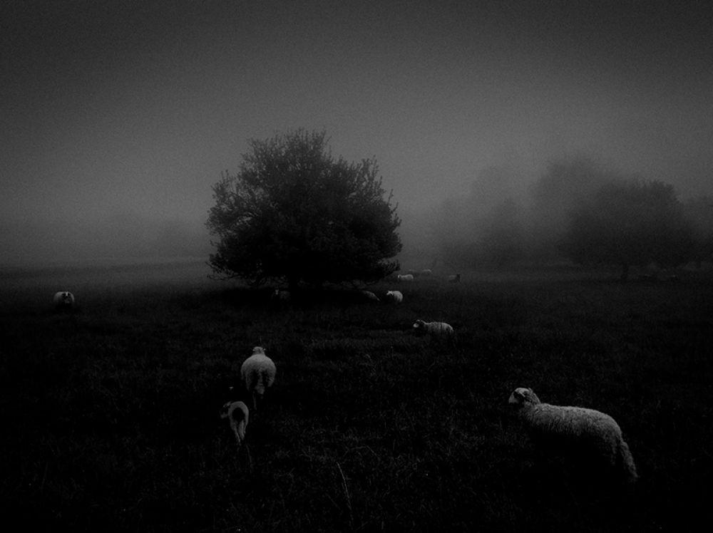 Сукру Мехмет Омур, Франция. 1-е место в категории «Природа». Утренний туман. Снято на iPhone 6S.