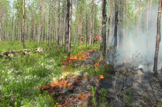 На Ямале бушуют два лесных пожара