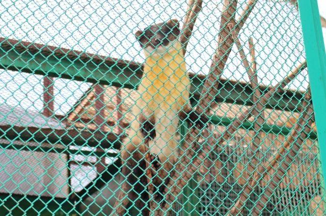 Сотрудники зоопарка благодарят руководство и персонал «Мотовилихинских заводов» и неравнодушных пермяков за помощь в поимке зверя.