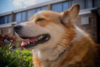 Собака помогла полиции расследовать преступление.