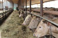 Фермерское хозяйство в Нефтеюганском районе