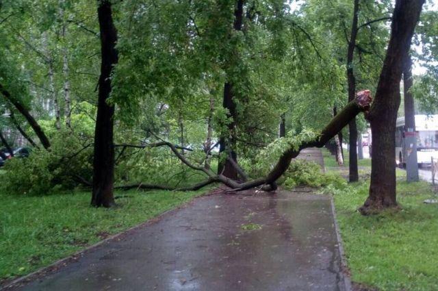 Дорогу перегородило на улице Ушакова в Кировском районе недалеко от автобусной остановки.