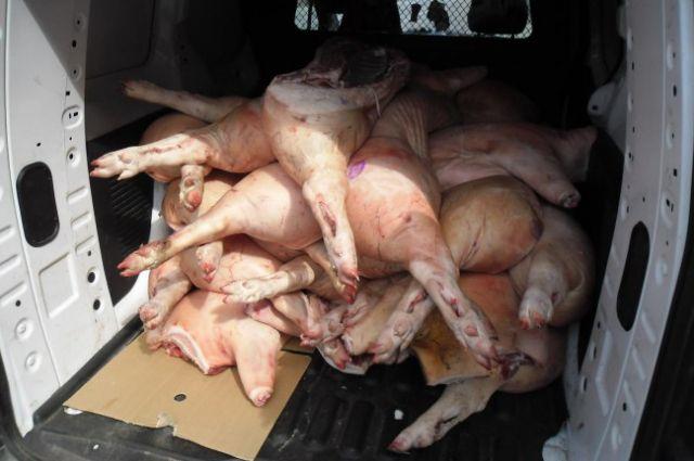 В Оренбуржье Россельхознадзор выявил и уничтожил более тонны опасного мяса.