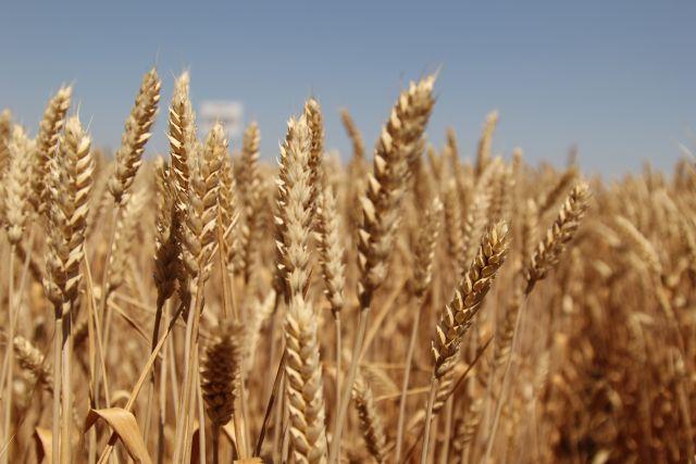 Китайская республика получит зерно извсех регионов РФ— Щедрая душа