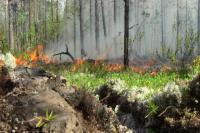 На территории Красноселькупского района действуют четыре лесных пожара