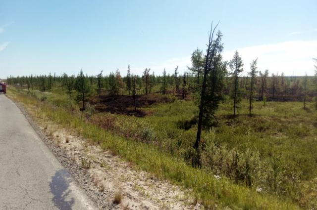 На Ямале действует пять лесных пожаров